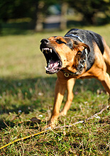 Dealing with Dominant & Aggressive Dogs by Ed Frawley