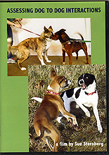 Assessing Dog to Dog Interactions by Sue Sternberg