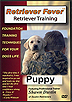 Retriever Fever: Retriever Training - Puppy by Shawn Dustin