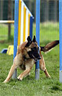 2010 AKC National Agility Championship by Competition DVDs